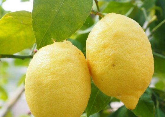 Essentiel De Citron : huile essentielle citron